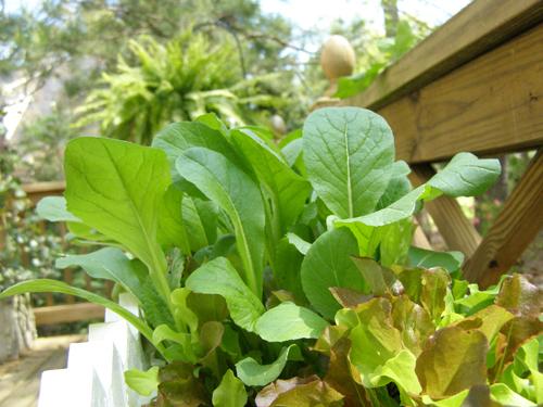 More Salad Greens